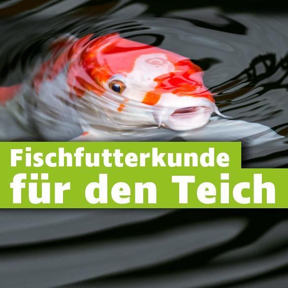 Fischfutterkunde_fuer_den_Teich